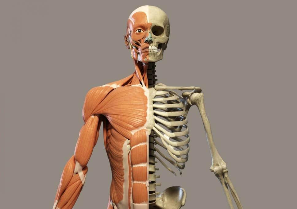 Triệu chứng cảnh báo bệnh ung thư xương